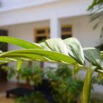 Casa Particular Camagüey mit sonnigem Patio