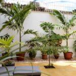Viele Pflanzen sorgen für eine besondere Atmosphäre im Patio